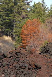 More autumnal colours on Mount Etna.