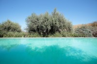 4/29 The pool, surrounded by olive trees.