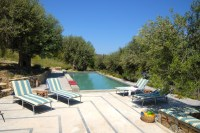 1/29 The pool and olive trees behind.