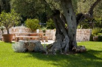 The grounds at Trullo del Sale are dotted with age-old olive trees.