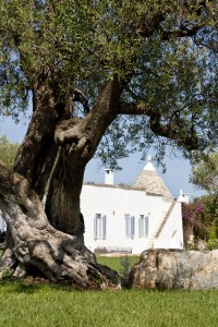 The careful restoration has maintained the charming structure and original features of the trullo.
