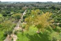 Villa Elia's grounds seen from the roof terrace.
